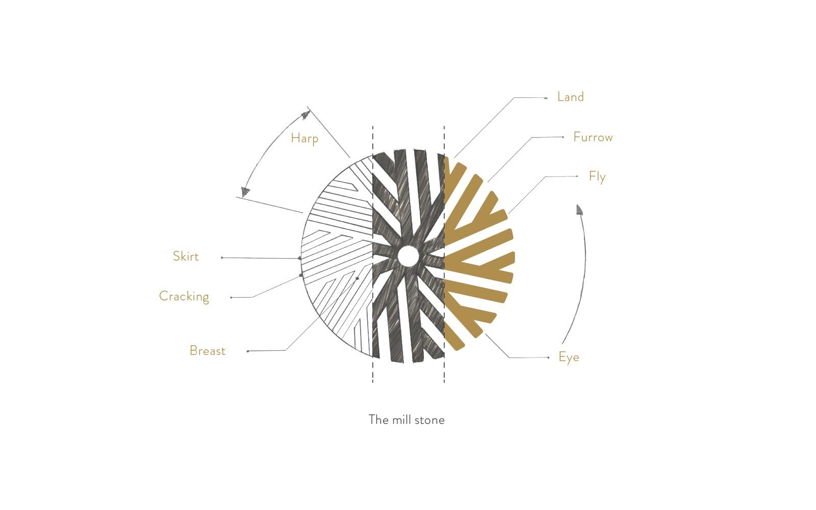 Mola-LogoSketch